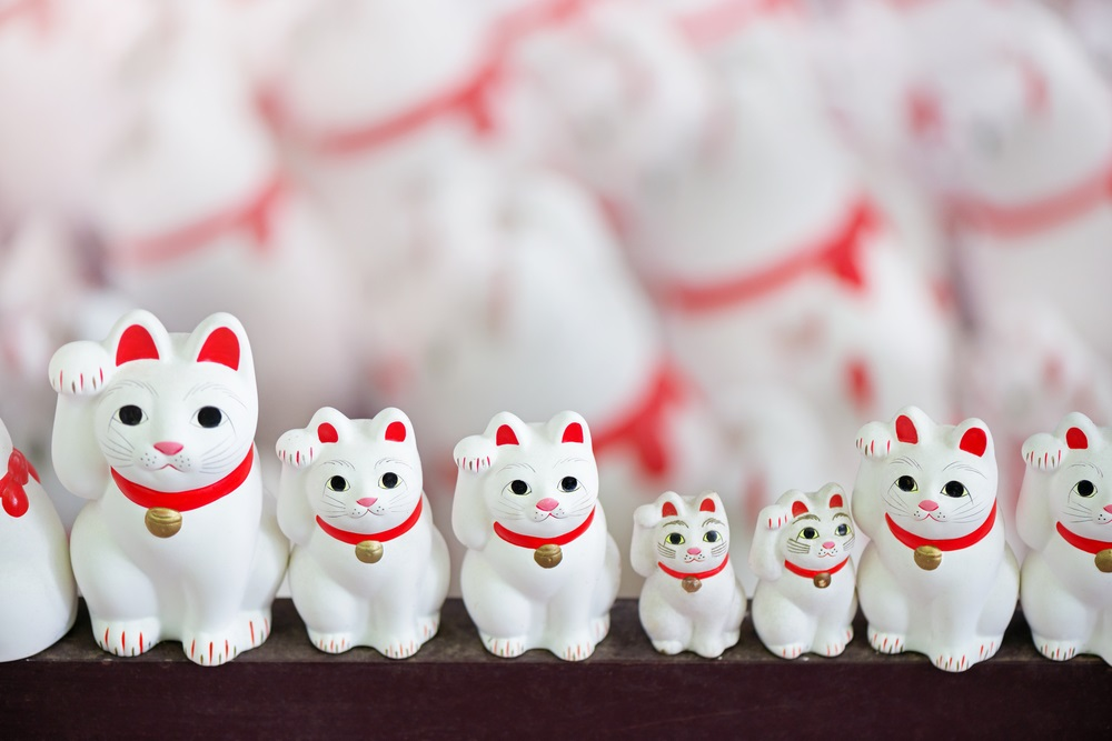 cats in china being praised